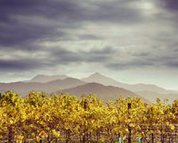 Instagram Vineyard Autumn Stock Photo
