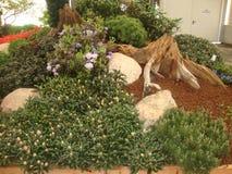 A instalação bonita da planta Projeto da paisagem foto de stock royalty free