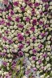 A instalação dos cravos-da-índia e dos crisântemos em um festival da flor mim Fotografia de Stock