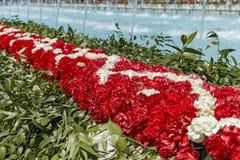 A instalação dos cravos em um festival da flor em Baku Foto de Stock Royalty Free