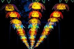 Instalación de las flores de Lotus Imagen de archivo libre de regalías