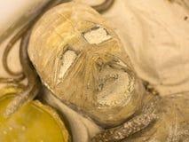 Instalacja antyczna głowa mamusia Zdjęcie Royalty Free