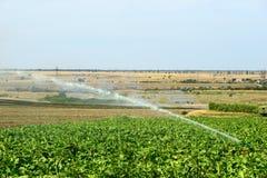 Instalacja system irygacyjny w polu, wodny kropidło w funkci podlewanie rolnicze rośliny fotografia royalty free