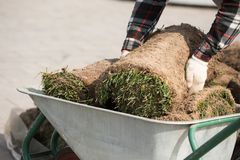 Instalador natural do profissional do relvado da grama Relvados de Installing Natural Grass do jardineiro que criam o campo bonit fotografia de stock