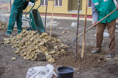 Install top soil after planting trees Royalty Free Stock Photo