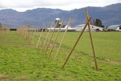 Installando per il raccolto di luppolo Immagine Stock