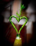 Installatie in de vorm van hart Stock Fotografie