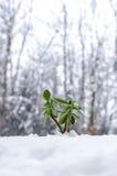 Installatie in de winter die uit sneeuw voortkomen Stock Foto's