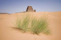 Installatie in de woestijn stock foto