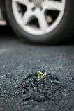 Installatie die door asfalt ontspruiten Stock Fotografie