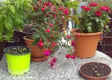 Installatie en bloemen op de balkonlijst Royalty-vrije Stock Foto