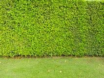 Installatie en grasachtergrond Royalty-vrije Stock Afbeelding