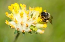 Installatie en insect Stock Foto