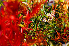 installatie hemels bamboe royalty-vrije stock foto's