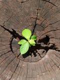 Installatie het groeien door boomstam van boom royalty-vrije stock afbeeldingen
