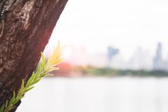 Installatie het groeien met zonlicht met duidelijk landschap in achtergrond, de Groei en Levensstijl stock afbeeldingen