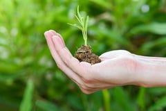 Installatie het groeien op hand - grond ter beschikking met groene jonge plant groeiende landbouw en het zaaien van de ochtend royalty-vrije stock foto's