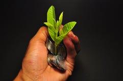 Installatie het groeien op muntstukken Het muntstuk van de handholding Besparingsgeld en investeringsconcept royalty-vrije stock fotografie