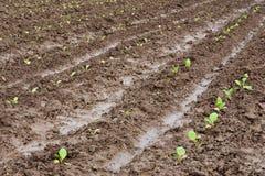 Installatie het groeien op verse modder na regen stock fotografie