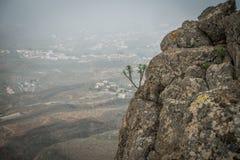 Installatie het groeien tussen rotsen stock fotografie
