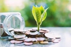 Installatie het groeien van muntstukken buiten de glaskruik op vage groen stock foto