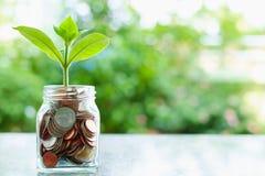 Installatie het groeien van muntstukken in de glaskruik op vage groene natur royalty-vrije stock afbeelding