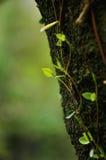 Installatie langs de boom wordt gekweekt die Royalty-vrije Stock Fotografie