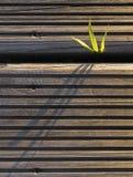 Installatie met drie bladeren die uit een hout te voorschijn komen Stock Afbeeldingen