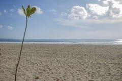 Installatie met een strand op de achtergrond Stock Foto