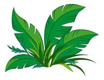 Installatie met groene bladeren royalty-vrije illustratie