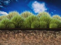 Installatie met ondergrondse wortels Royalty-vrije Stock Fotografie