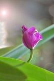 Installatie met purpere bloemen Stock Afbeelding