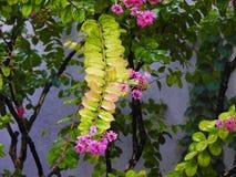 Installatie met purpere bloemen Stock Foto