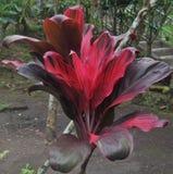 Installatie met rode bladeren in Bali Indonesië stock foto