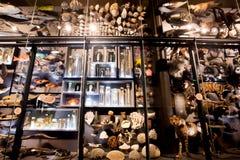 Installatie met specimens van uitgestorven dieren en modern inMuseumbont Naturkunde Stock Afbeelding