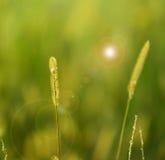 Installatie op de lenteachtergrond Royalty-vrije Stock Afbeeldingen