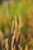 Installatie op de lenteachtergrond Royalty-vrije Stock Fotografie