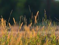 Installatie op de lenteachtergrond Stock Foto