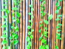 Installatie op een bamboeomheining Royalty-vrije Stock Fotografie