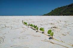 Installatie op het strand Stock Foto's