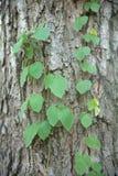 Installatie op schors van een oude boom Stock Foto