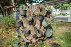 Installatie in plastic potten op dode stomp Stock Fotografie