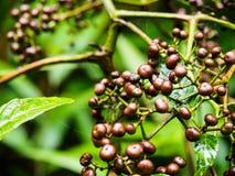Installatie in tropisch regenwoud Stock Foto's