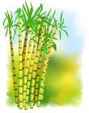 Installatie van suikerriet. vector illustratie