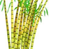 Installatie van suikerriet. Royalty-vrije Stock Afbeeldingen