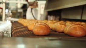 Installatie voor de productie van brood stock videobeelden
