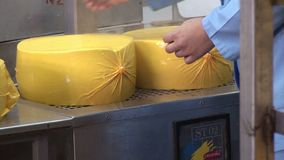 Installatie voor de productie van kaas Kaas verpakking stock footage