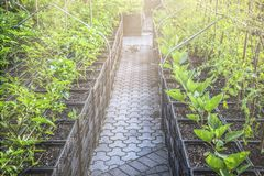 Installatiejonge boompjes in potten klaar voor het planten royalty-vrije stock foto's
