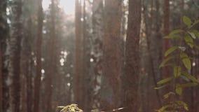 Installaties in bos stock videobeelden