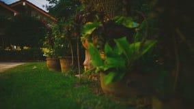 Installaties in de tuin stock video
